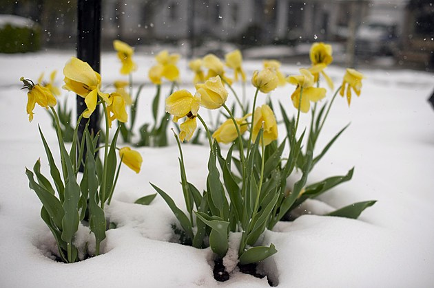 April Storm Dumps Snow Across Northeastern U.S.